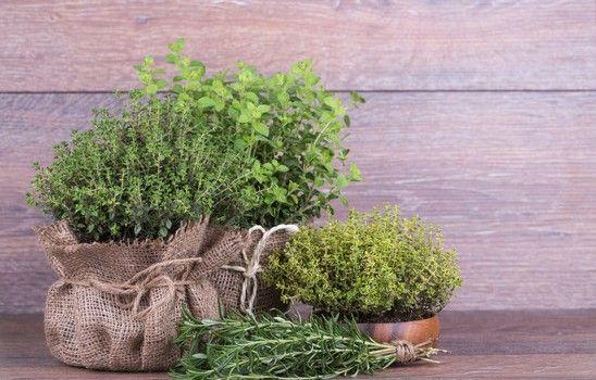 thym plantation entretien et r colte culture et jardin pinterest gardens. Black Bedroom Furniture Sets. Home Design Ideas