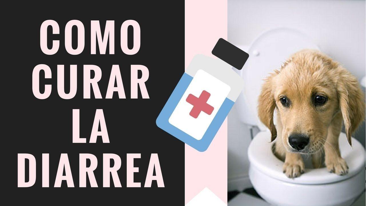 Como Curar a un Perro con Diarrea - 3 Pasos Sencillos para Detener la Di...