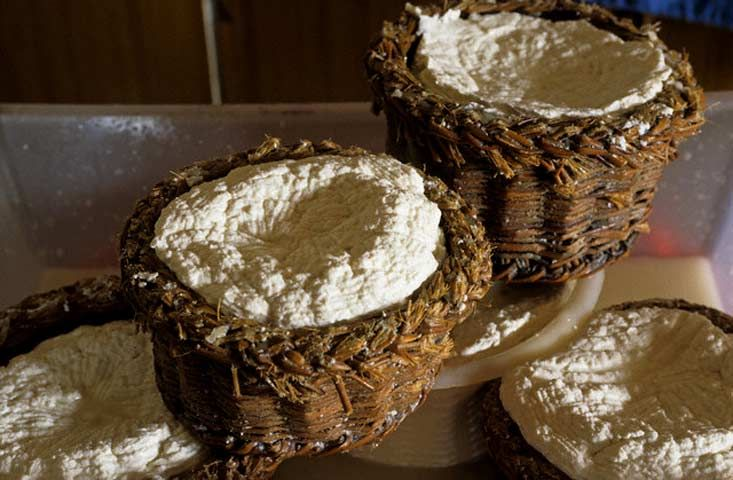 RICOTTA FRESCA SICILIANA Latticino magro, fresco, a pasta molle. Non un formaggio, che, per le sue caratteristiche di freschezza e di contenuti, rappresenta un alimento completo, magro, molto digeribile. In Italia viene prodotta in ogni caseificio che, sfruttando le proprietà del siero, raccoglie le sieroproteine rimaste dopo la lavorazione del formaggio. È considerata un sottoprodotto. Storicamente il siero veniva acidificato con l'agra, ovvero una miscela di siero e limone o aceto.