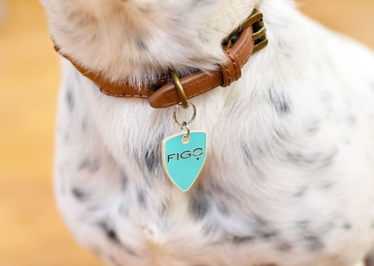 9 Reasons You Should Invest In Figo Pet Insurance The Broke Dog Dog Insurance Pet Insurance Cost Pet Insurance Reviews