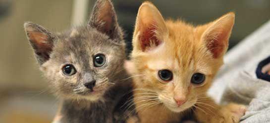 Http Blog Aspca Org Tags Adoption Kitten Adoption Cute Animals Weekend In Nyc