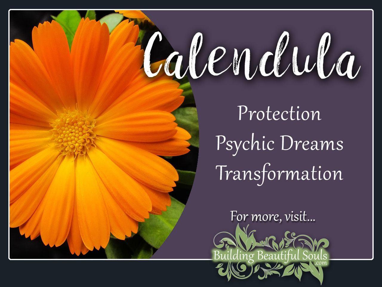 Calendula Meaning & Symbolism Flower meanings, Calendula