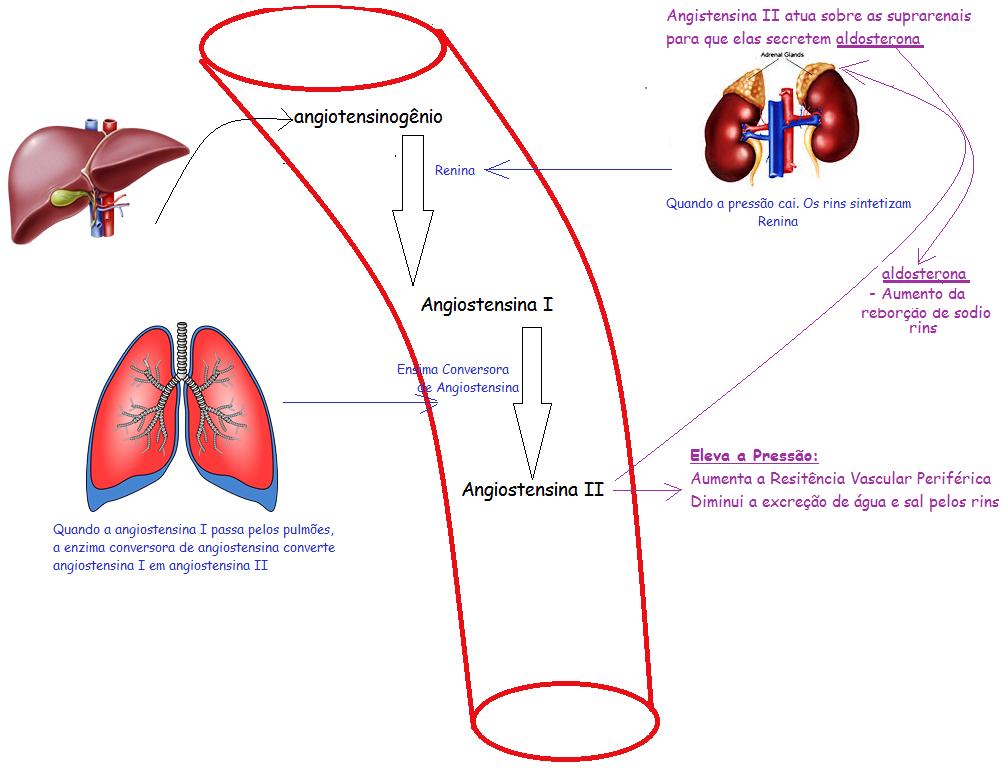 Dieta baja en renina y alta hipertensión aldosterona