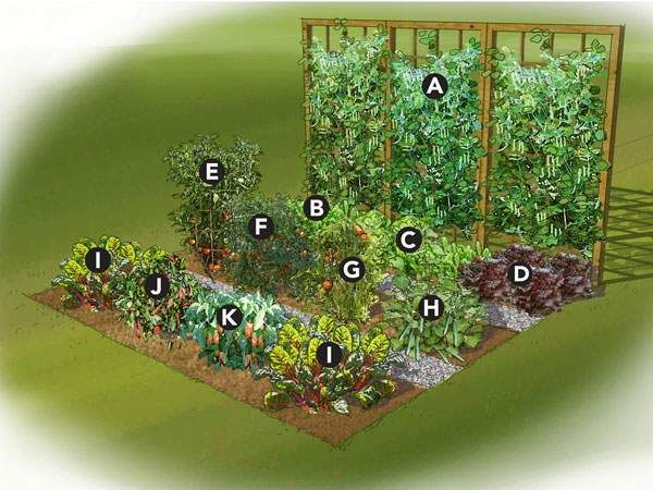 Small vegetable garden ideas pinteres for Veggie patch layout
