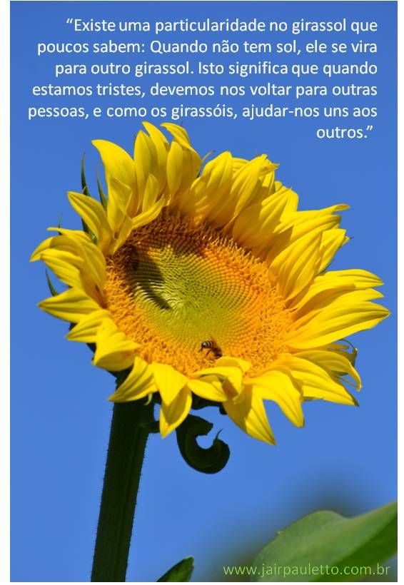 A mensagem do Girassol | Foto Poesia | Girassol, Frases ...
