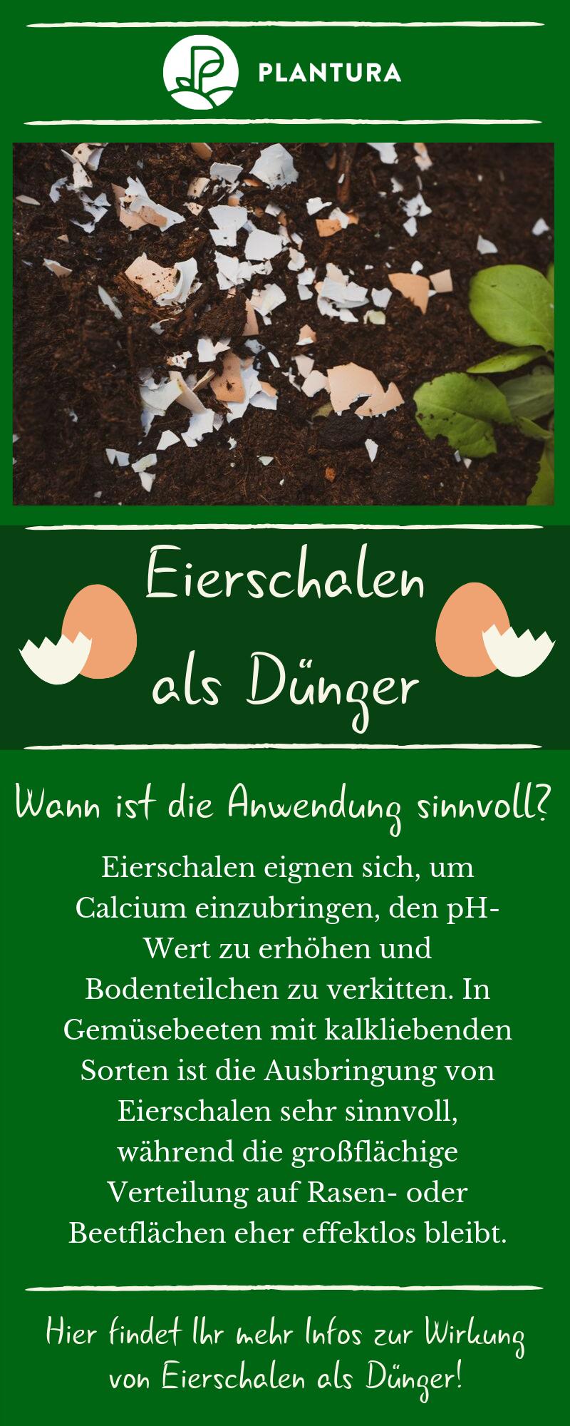 Eierschalen als Dünger: Anwendung & Wirkung - Plantura