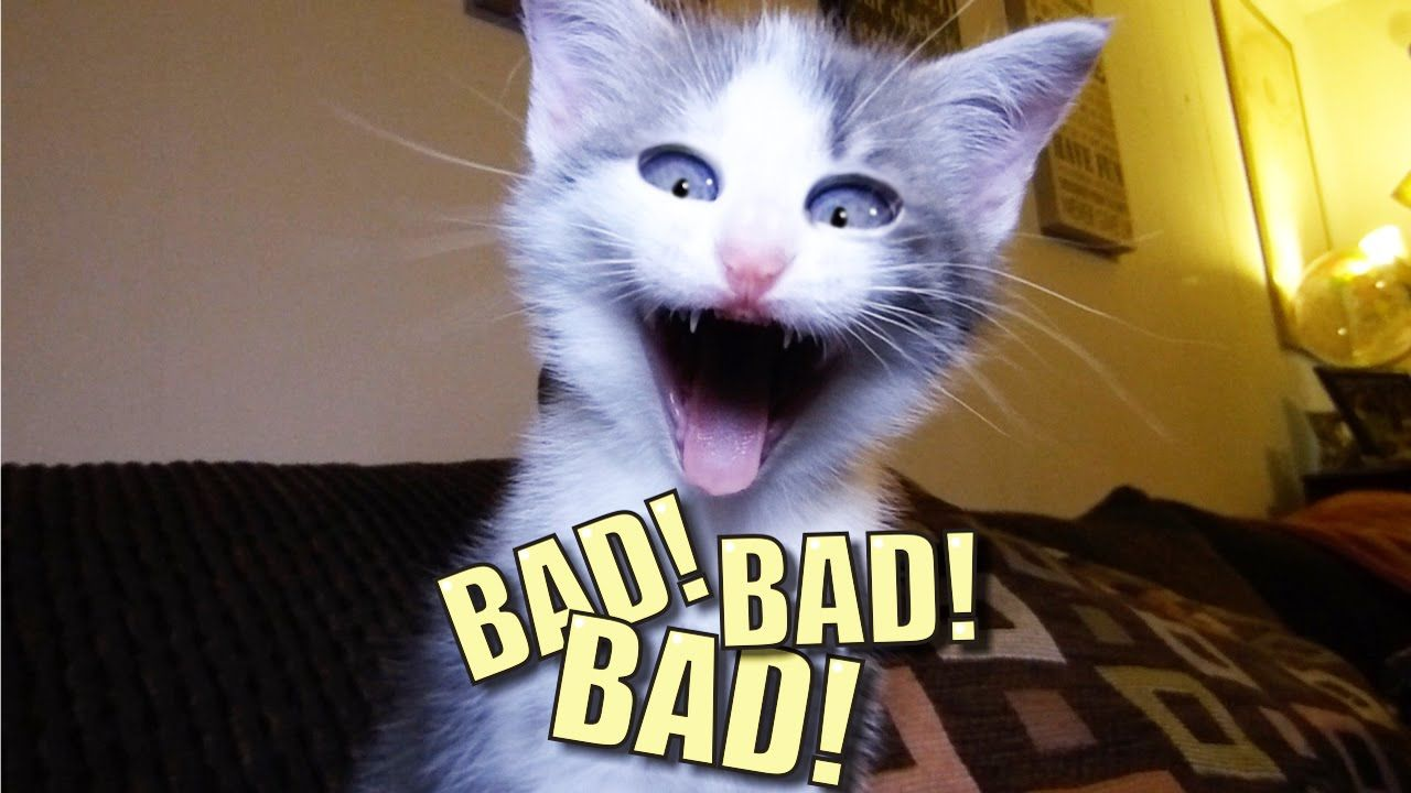 Talking Kitty Cat 44 BAD BAD BAD Sylvester