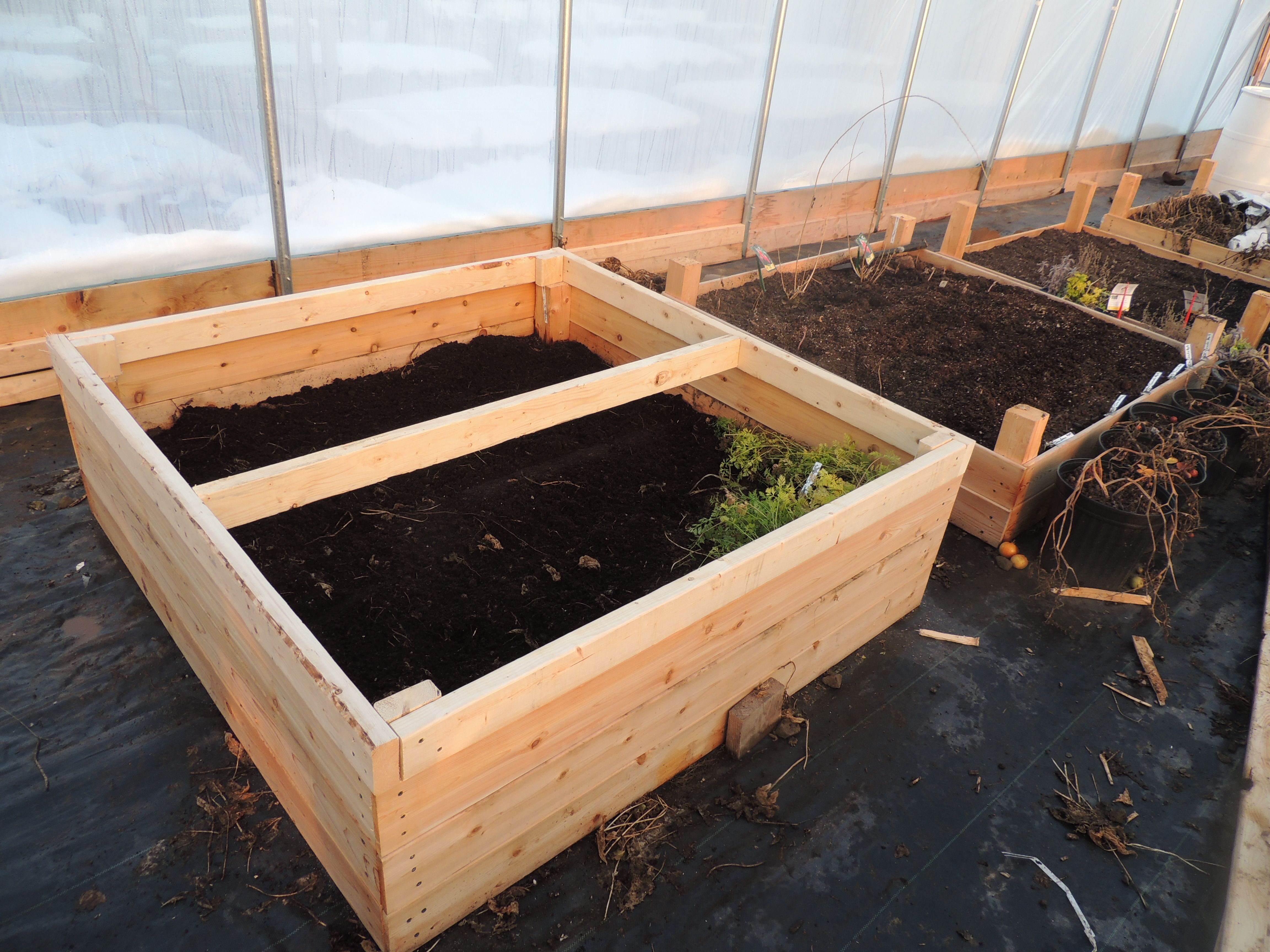 greenhouse raised bed winter gardening with cold frame