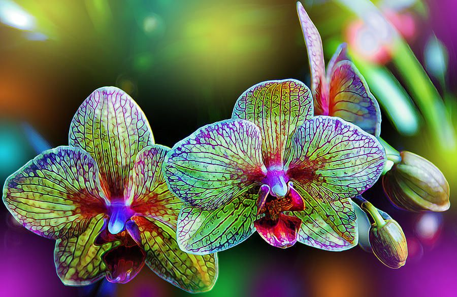 Alien Orchids By Bill Tiepelman Beautiful Orchids Orchid Photography Unusual Flowers