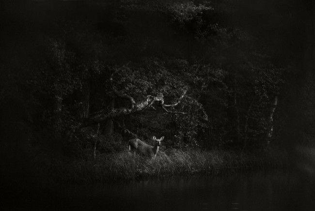 Vuosi metsässä, Taidekeskus Harri, Alavus | Näyttelyuutiset | Ymparistosivistys