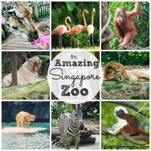 The Ultimate Family Travel Guide To Singapore Paging Fun Mums Singapore Zoo Family Friendly Vacation Family Travel
