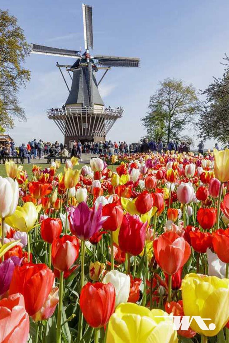 Anda Penggemar Bunga Tulip Jika Iya Maka Musim Semi Nanti Adalah Saat Yang Tepat Untuk Menyaksikan Jutaan Bunga Tulip Yang Mekar Bunga Tulip Kebun Bunga Mekar