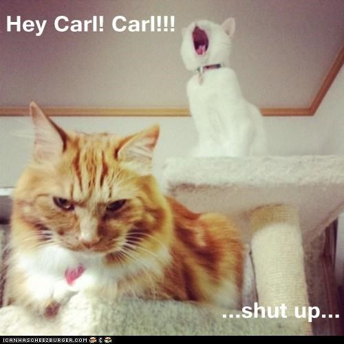 8387f7bb907d1589c87b79064e4f8b77 hey carl! carl!!! shut up carl meme, funny quotes and meme