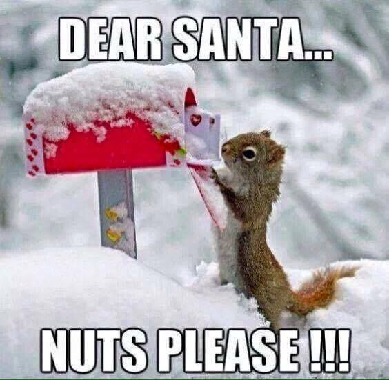 Dear Santa Nuts Please Holidays Christmas Christmas Quotes Funny Christmas Quotes Holiday Quotes Christmas Christmas Animals Animal Valentine Christmas Memes