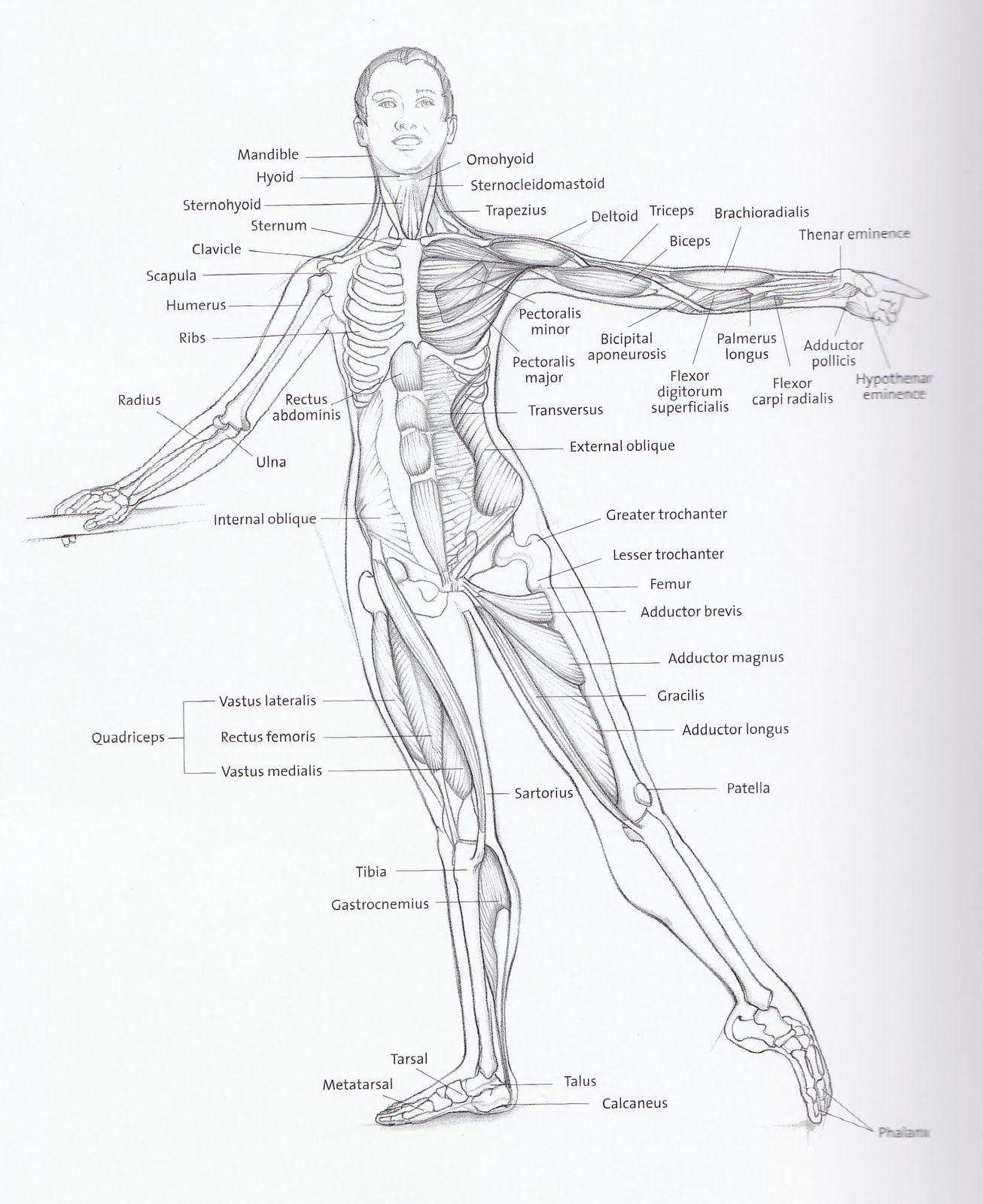 Major Muscles Worksheet