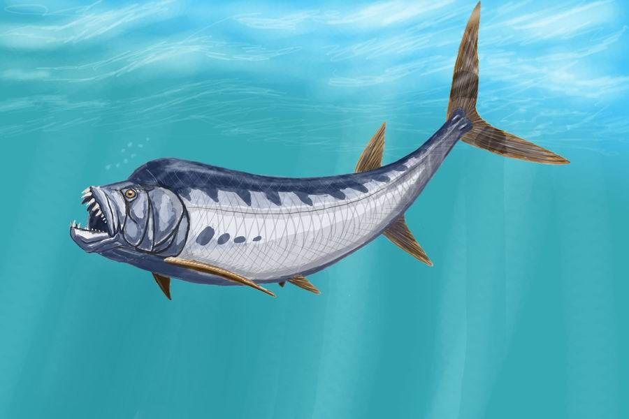 XiphactinusDB - 劍射魚 - 維基百科。自由的百科全書 | Prehistoric animals. Prehistoric. Animals