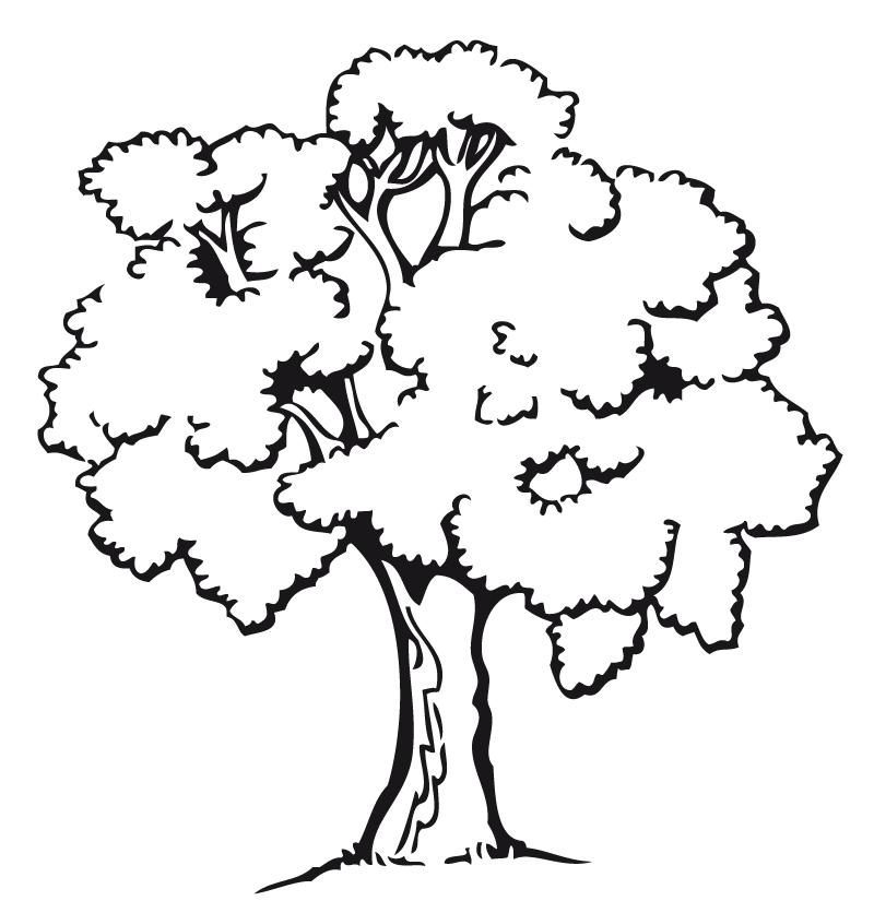 Dibujo De Arbol Frondoso Google Search Dibujo De Arbol Dibujos De Arboles Paginas Para Colorear De Animales