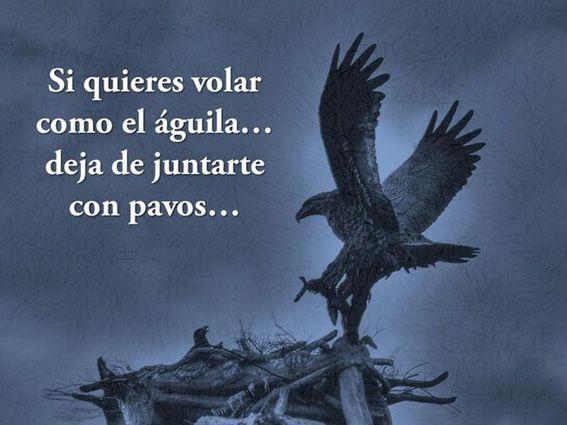 ... Si quieres volar como el águila... deja de juntarte con pavos...
