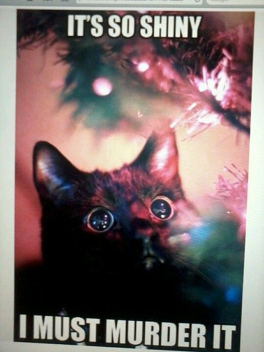 My cat every year at Christmas