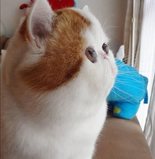 Omg... it's face is so flat... I want it.. right meow