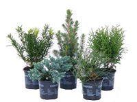 Ogrodowe Rosliny Ozdobne Kupuj I Zamawiaj W Obi Plants