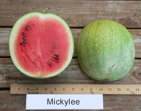 Image result for mickylee watermelon