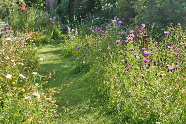 How to turn a dull garden into a natural kids paradise for Wild grass gardens
