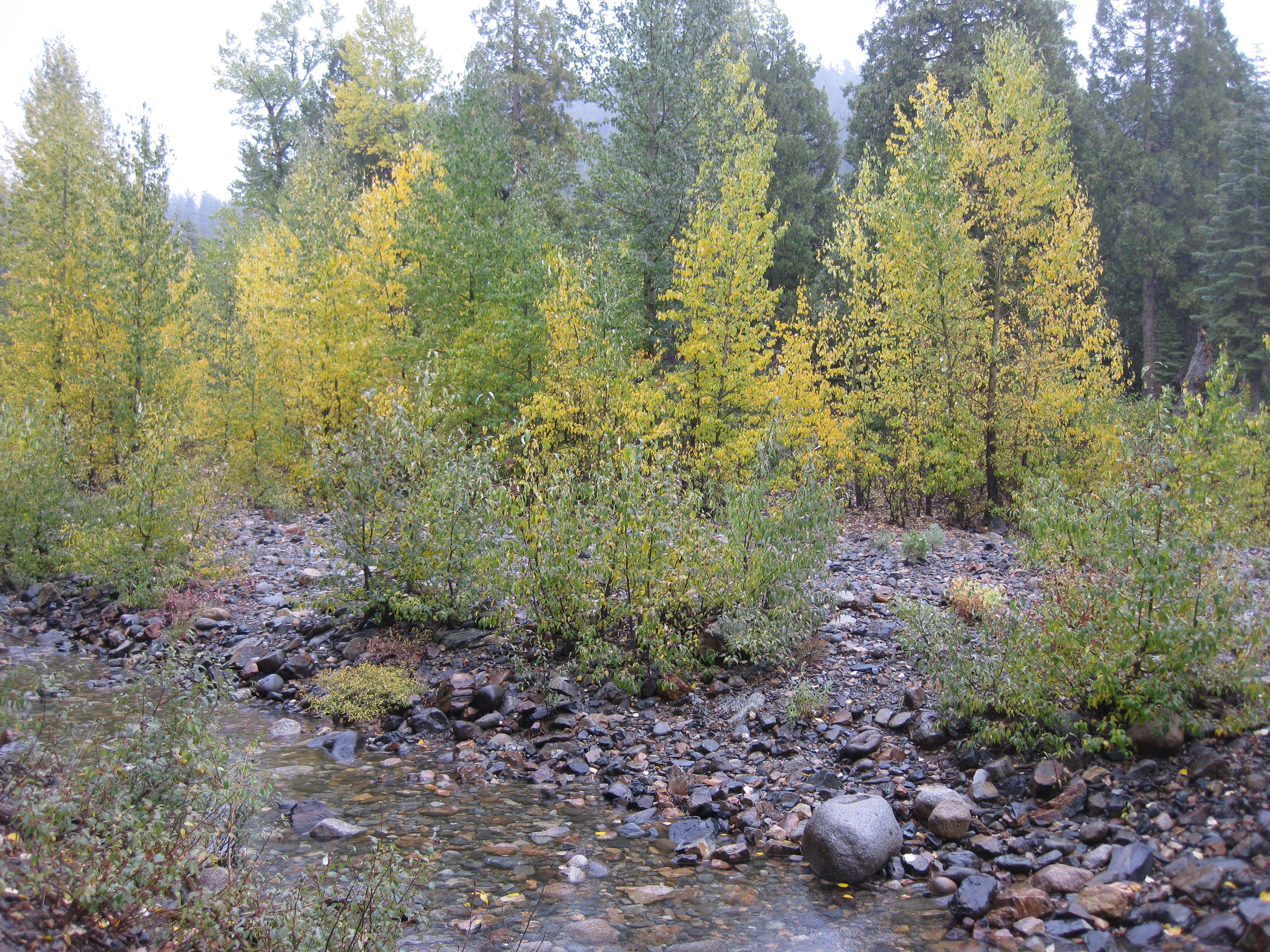 Cisco Grove Campground Cisco Grove Favorite Camping