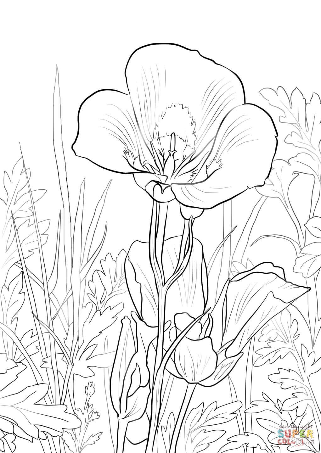 sego-lily-coloring-page.jpg (1020×1440) | Flower coloring ...