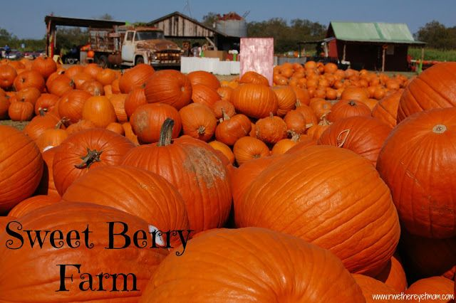 Sweet Berry Farm in Fall ~ Marble Falls, TX - R We There Yet Mom? | Family Travel for Texas and beyond...