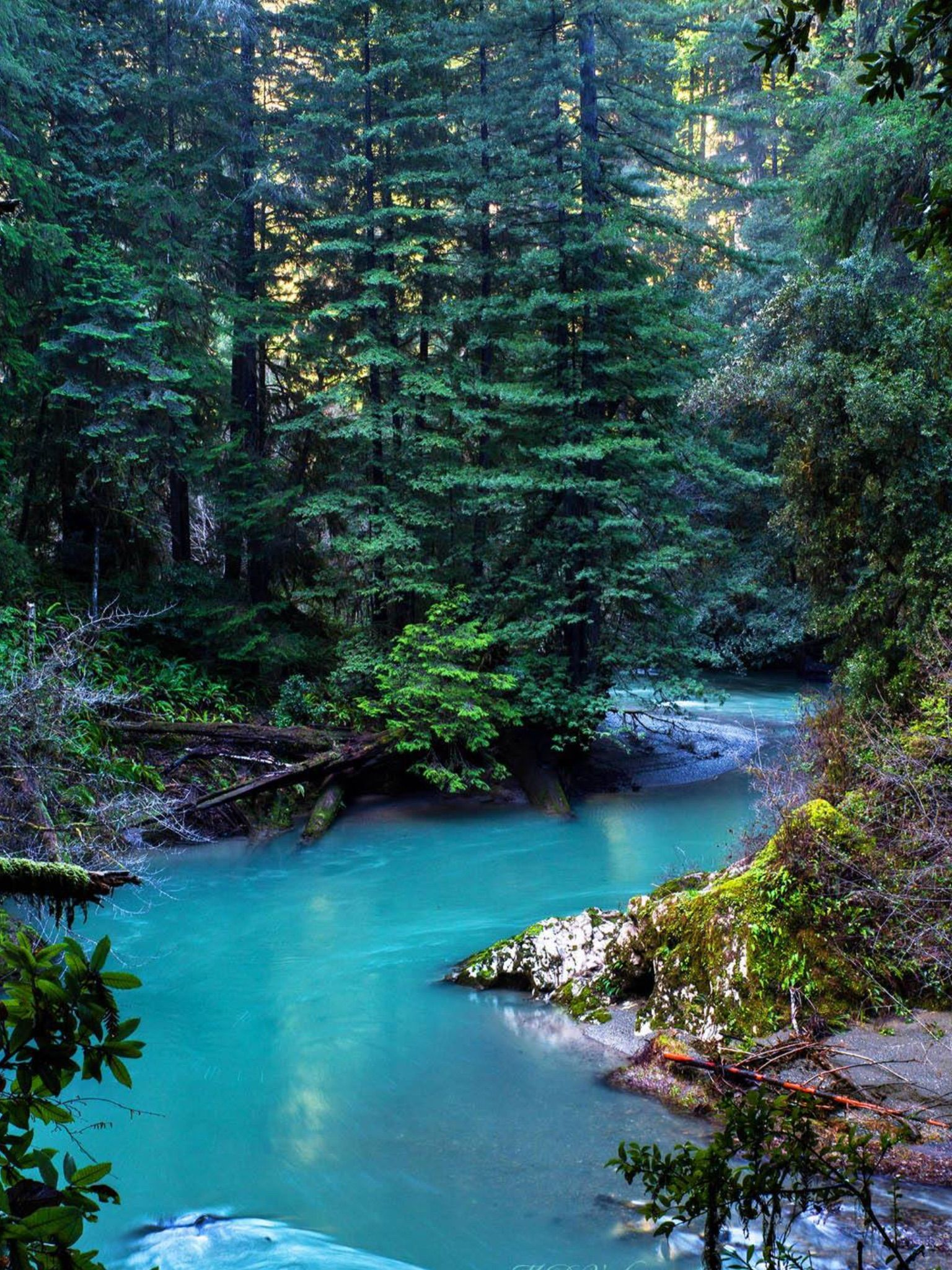Jedediah Smith Redwoods State Park Beautiful World