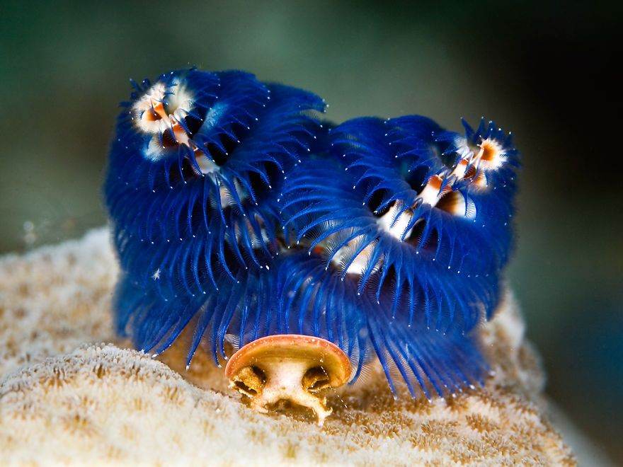 10 Most Amazing Sea Creatures Ever Discovered In 2020 Sea Creatures Deep Sea Creatures Fish Pet