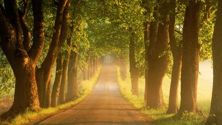 Tree Lined Country Road At Sunrise Sweden Country Lined