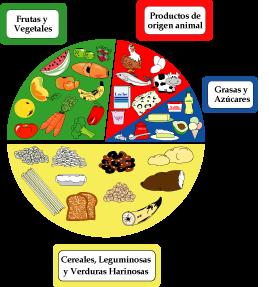 Círculo de alimentos de alimentación saludable