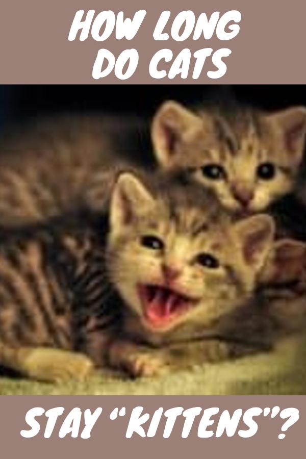 How Long Do Cats Stay Kittens Kittens Funny Kittens Cute Cat Names