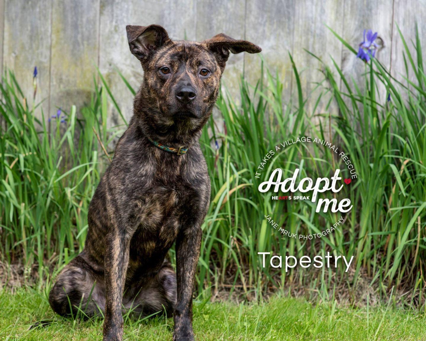 Adopt Tapestry On Pitbull Terrier Pitbulls Bull Terrier Dog