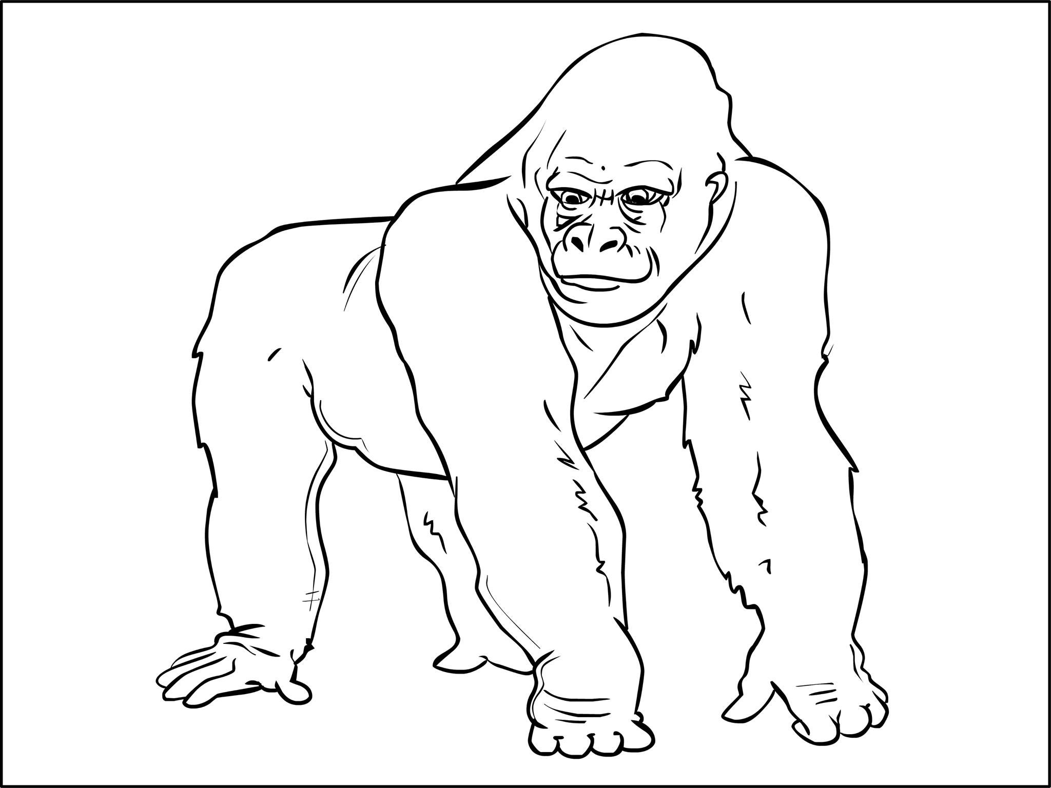 Coloriages Animaux Sauvages - MonsieurTeddy   Coloriage ...