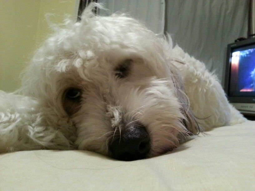 Toto sleep