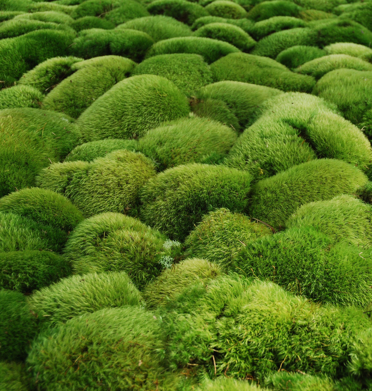 пышная растительность картинки многощетинковые