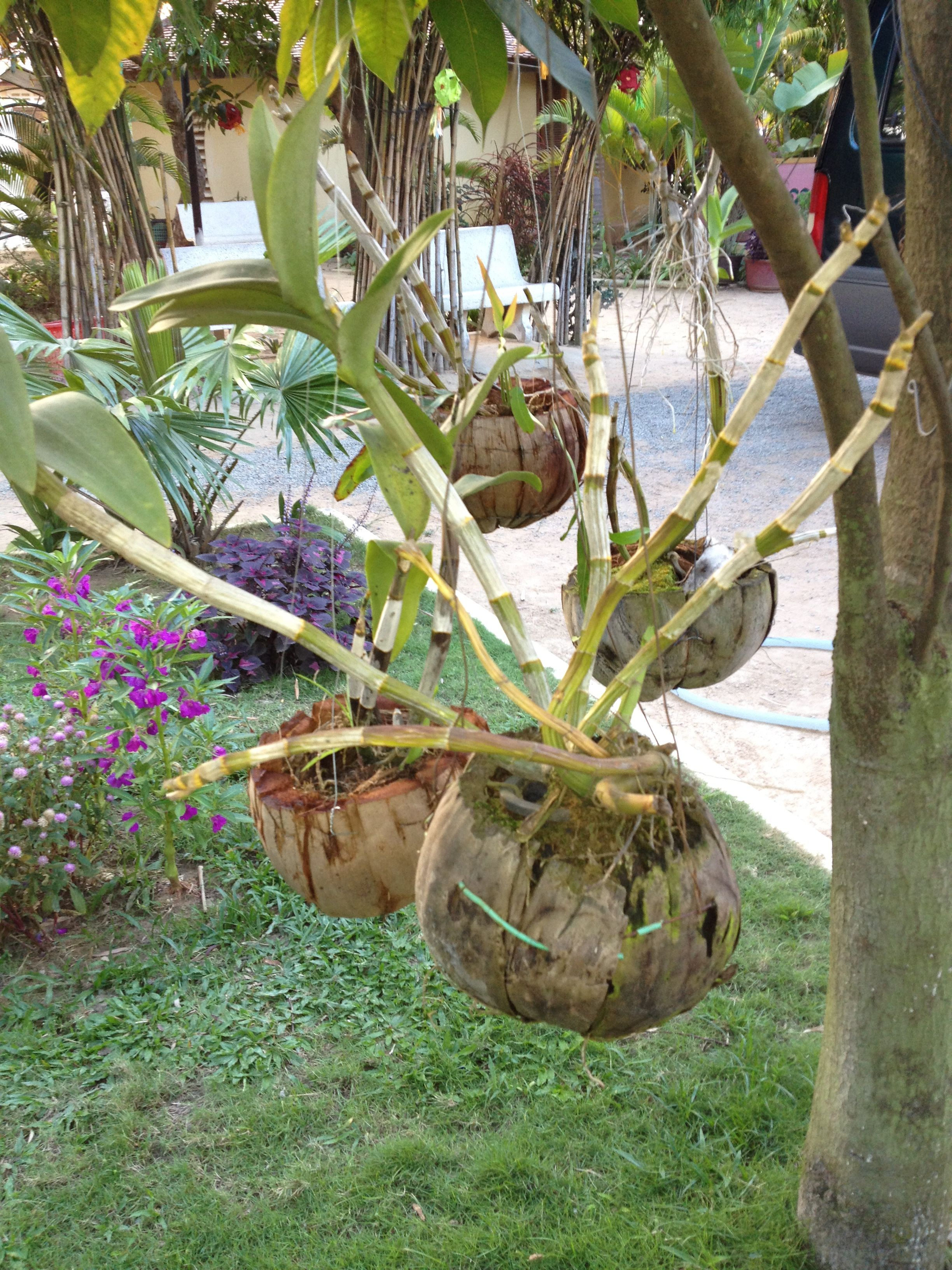 coconut shell hanging baskets