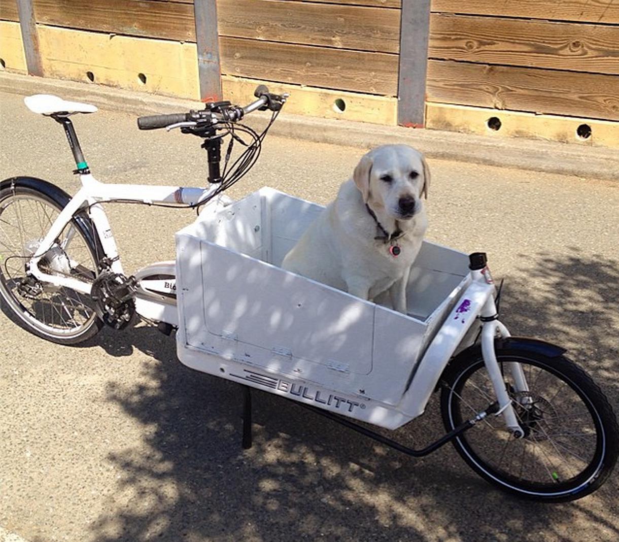 Bullitt Electric Assist Cargo Bike Review Cargo Bike Bullitt Cargo Bike Biking With Dog