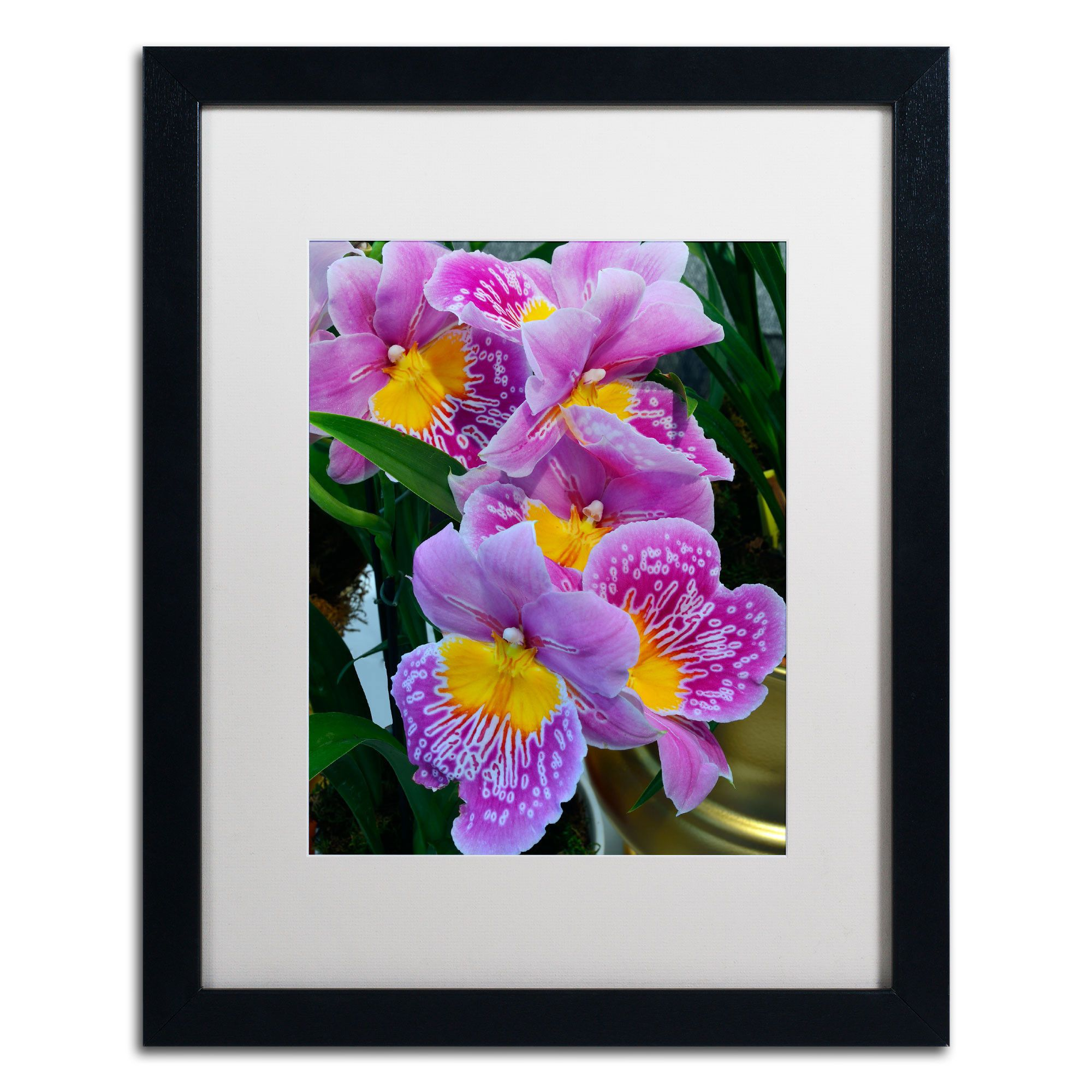 'Happy Orchids' by Kurt Shaffer Framed Photographic Print