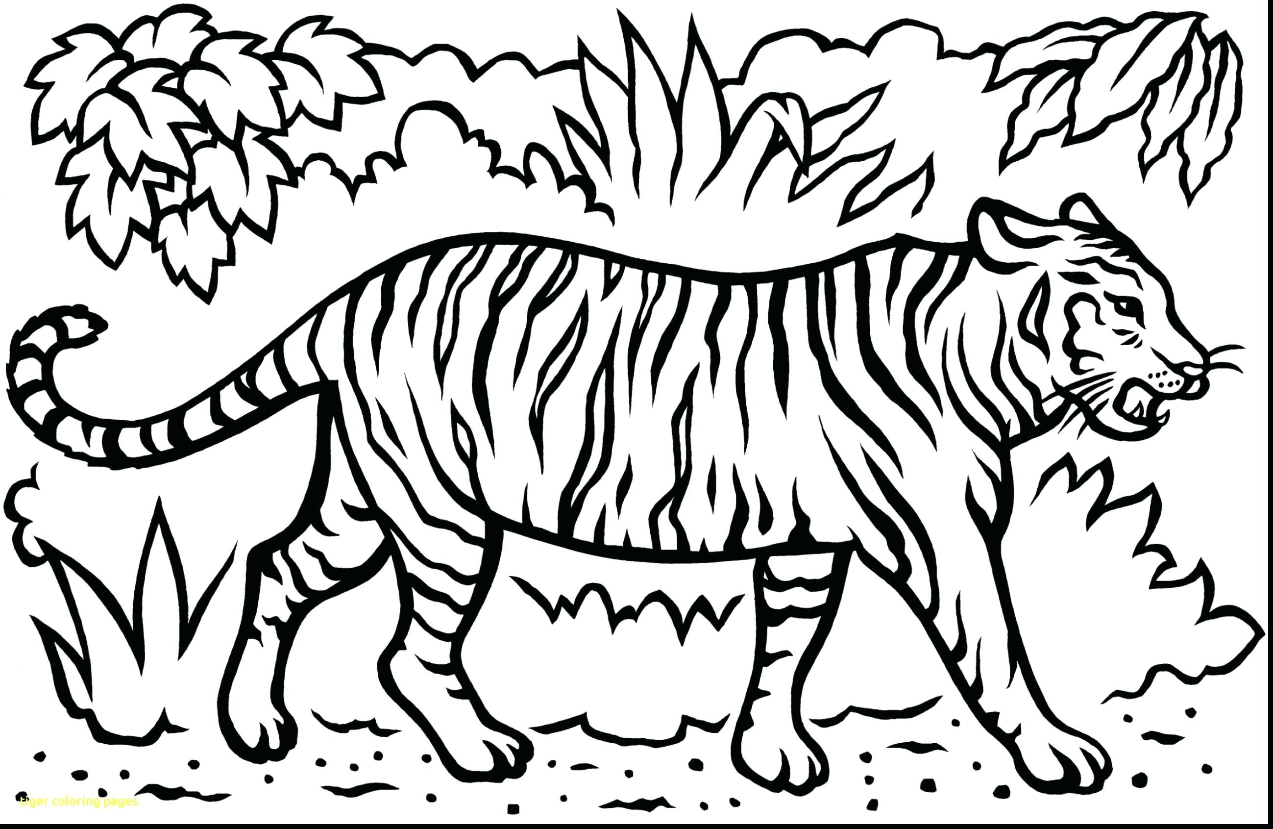 Baby Tiger Coloring Pages Coloring Pages Coloring Pages Of Daniel