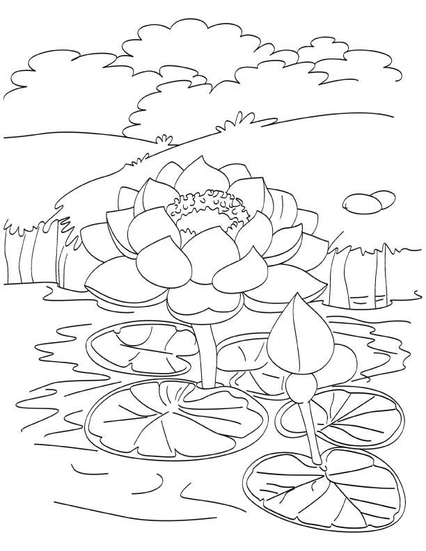Blooming Lotus In Pond Coloring Page Download Free Blooming Lotus