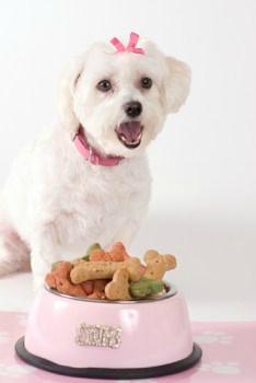 Pet Maltese Information Center Dog food recipes, Teacup