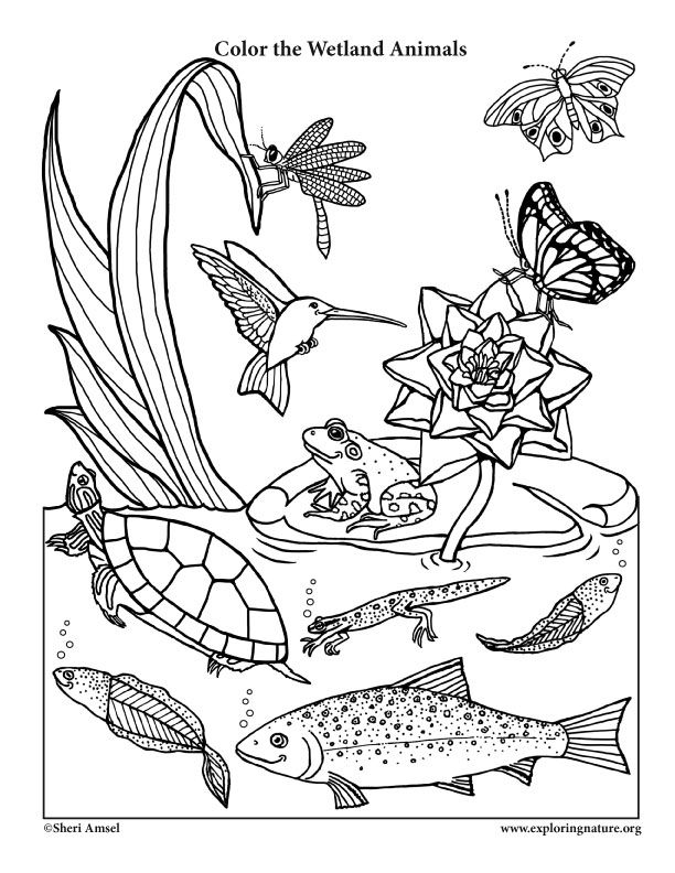 A Wetland Coloring Page For Very Young Naturalists With A Little Smiling Animal Twist Animal Habitats Animal Coloring Pages Animals That Hibernate