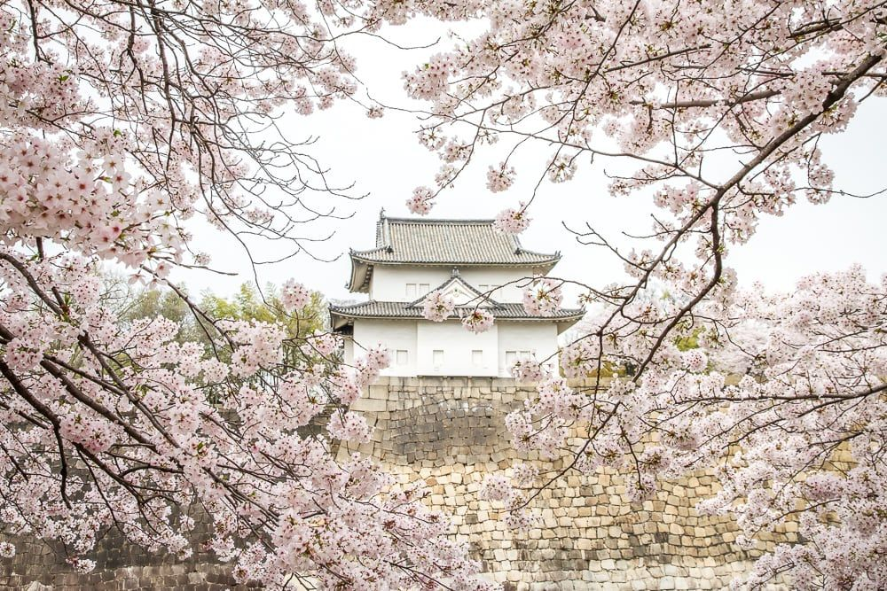 Our Incredible Osaka Cherry Blossoms Experience