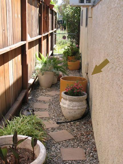 Very narrow garden google search garden pinterest for Narrow trees for tight spaces