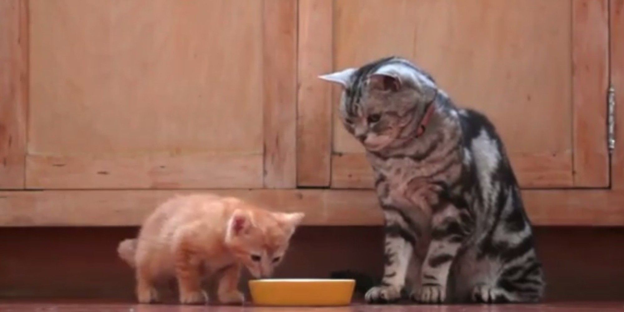 Adorable Kitten Gets Advice From A Grumpy Old Cat Crazy Cats Old Cats Adorable Kitten