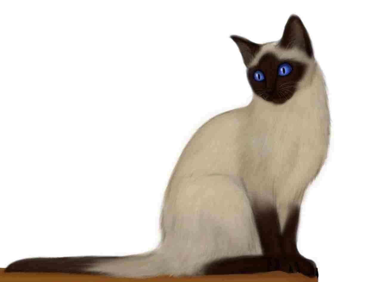 Siamese Cat Cartoon Cat Breeds With Pictures Cute Cat Breeds